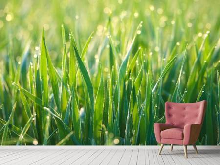 Photo Wallpaper Grass with morning dew XL