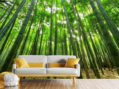 Photo Wallpaper The bamboo forest