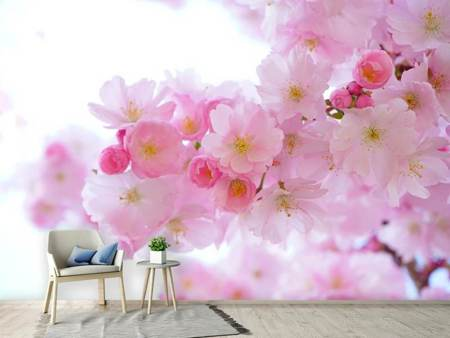 Photo Wallpaper Japanese cherry blossom XL