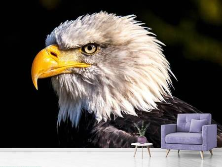 Photo Wallpaper The eagle head