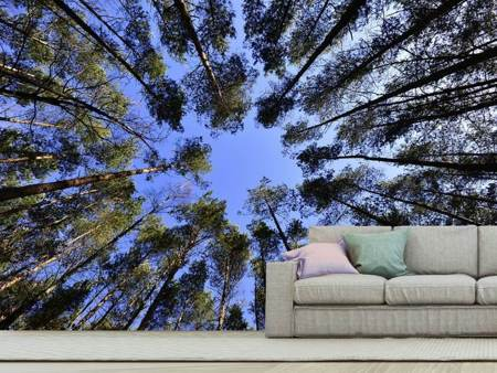 Photo Wallpaper Under high treetops