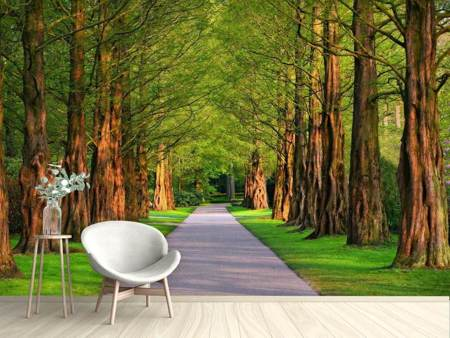 Photo Wallpaper Beautiful avenue in nature