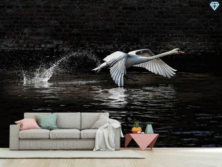 Photo Wallpaper Flying Swan