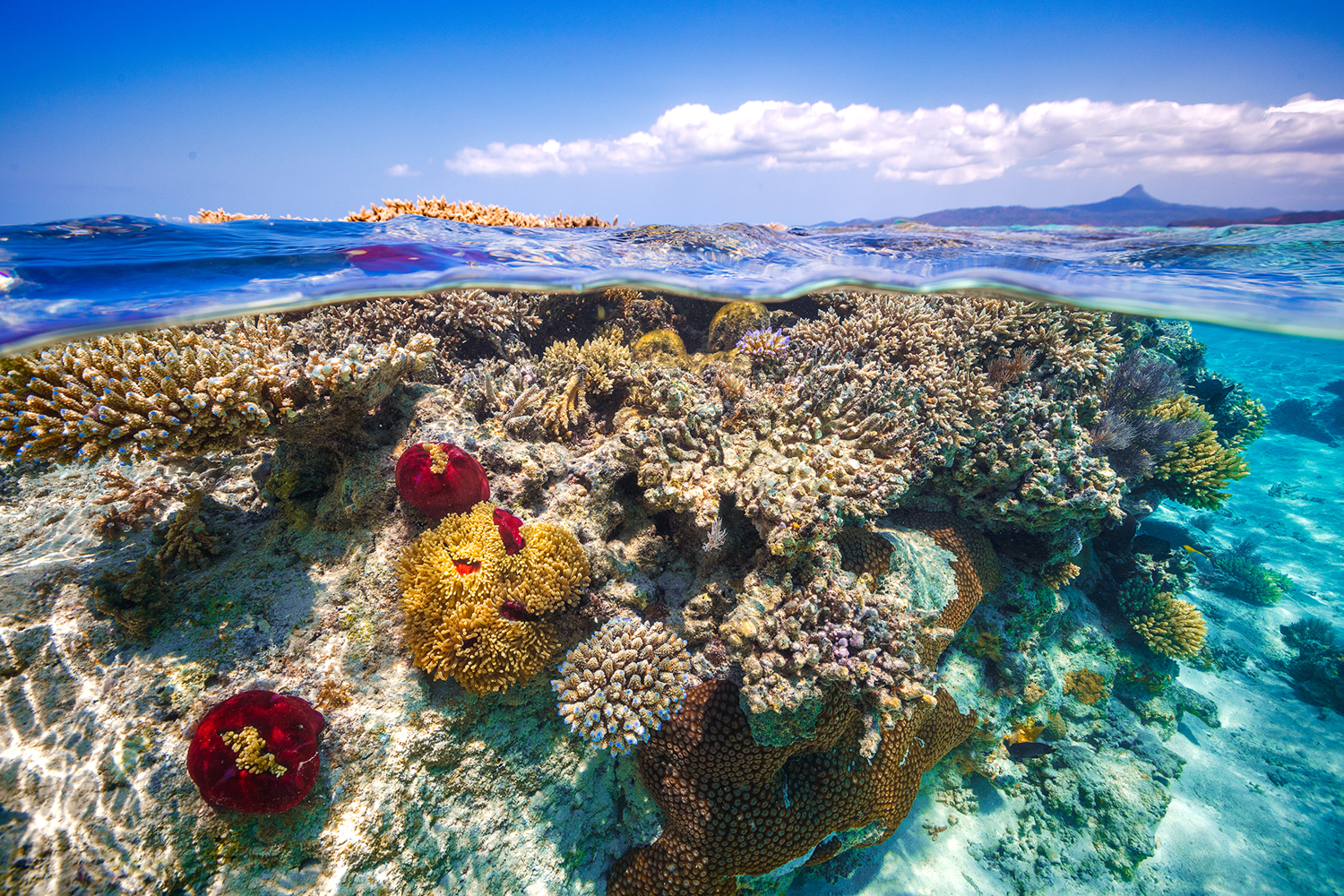 Fototapete Mayotte - the Reef