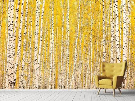 Photo Wallpaper The Birch Forest In Autumn