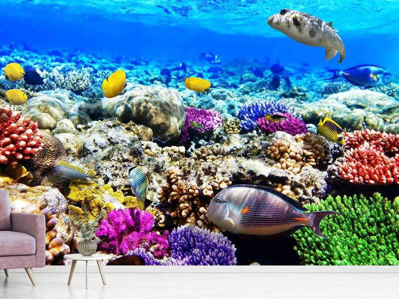 Photo Wallpaper Fish Aquarium