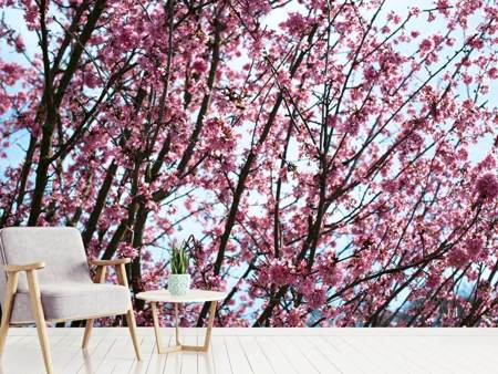 Photo Wallpaper Japanese Cherry Blossom