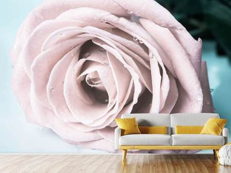 Photo Wallpaper Pastel Rose