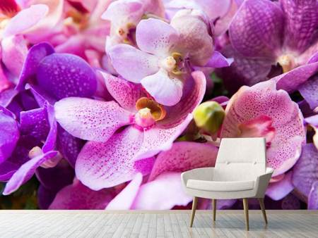 Fotomurale Il paradiso delle orchidee