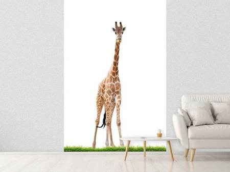 Papier peint photo La longue girafe